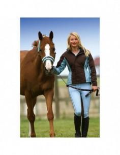 Collier pour chevaux APOLLO